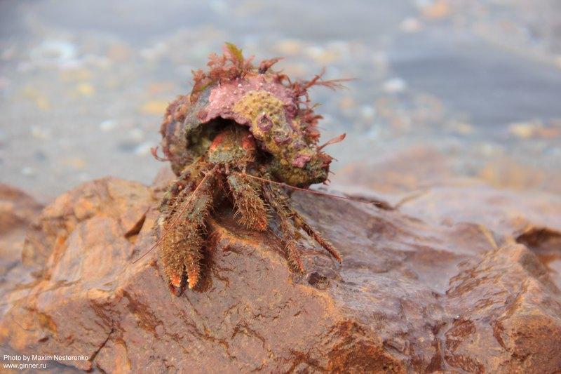 krabbe3127