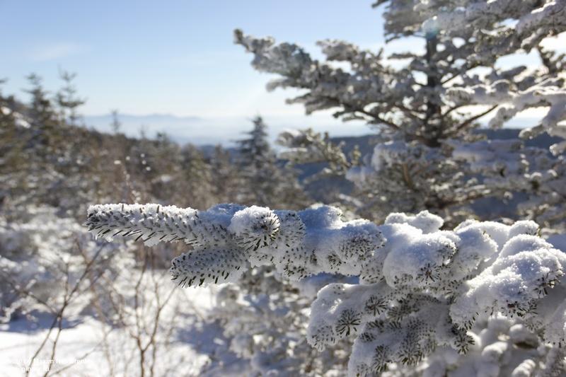 sneg-falaza01
