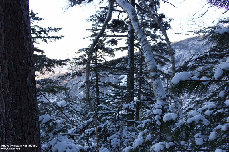 winter-falaza14